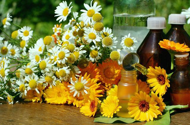 травы и настойки народной медицины