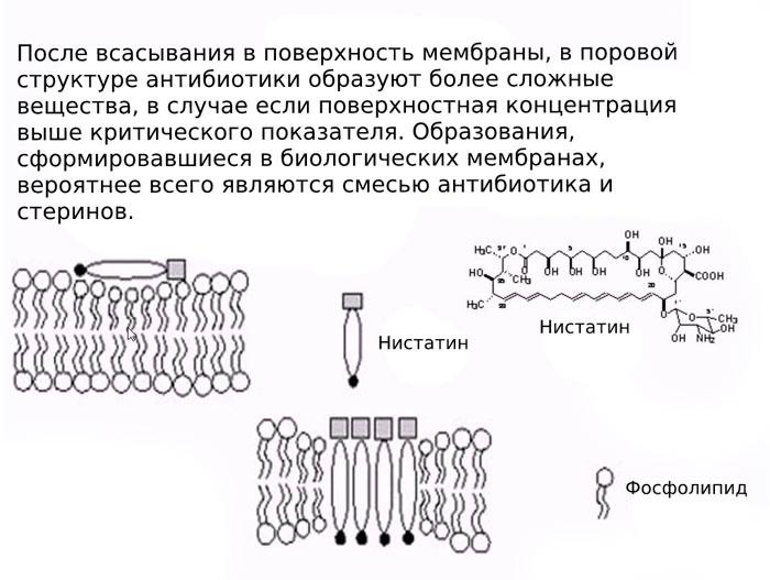 механизм действия нистатина