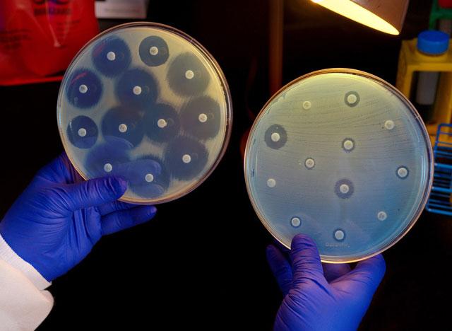 анализ грибков на устойчивость к действующему веществу