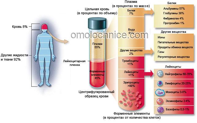 состав крови в норме