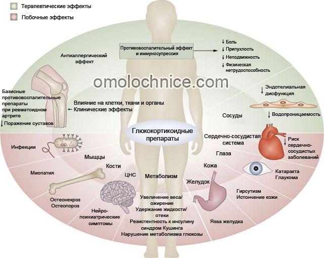 действие глюкокортикоидных препаратов