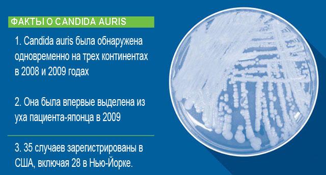 факты о Candida Auris