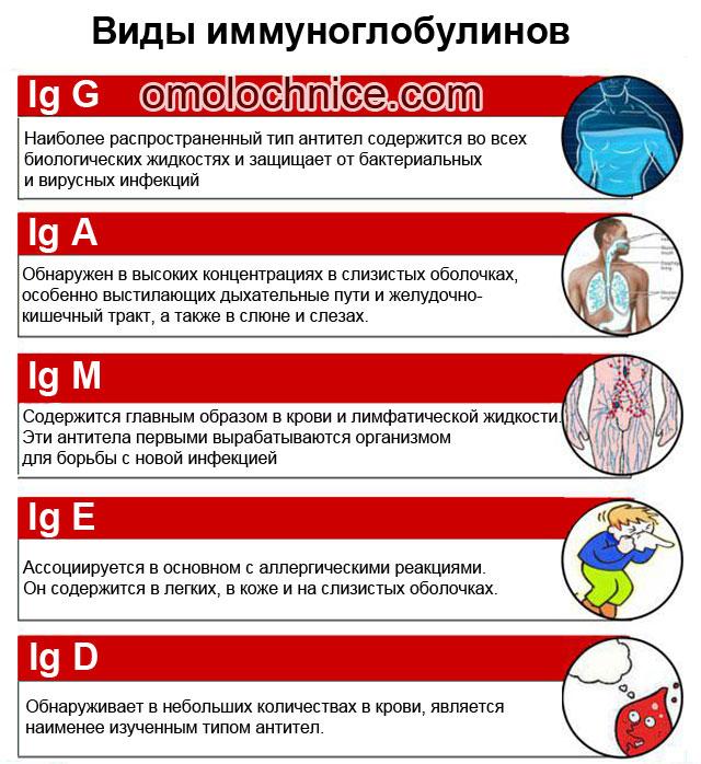 виды иммуноглобулинов