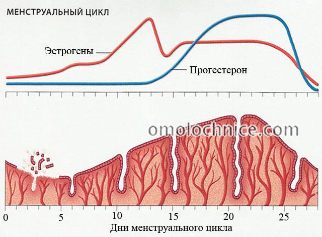 колебания содержания гормонов в крови во время менструального цикла в норме